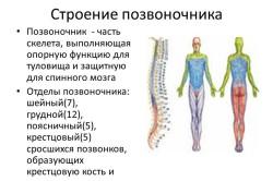 Tut den Darmkanal weh gibt in den Rücken zurück